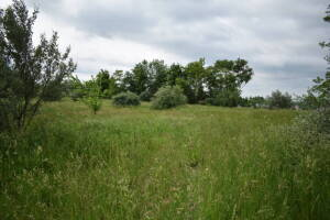 75 +/- Acre Stonewood Land Auction