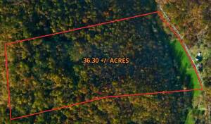Lewis County 36 +/- Acres