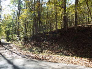 29+/- Acre Barbour County Land with Oil & Gas Rights