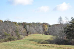160 Acre Calhoun County Farm